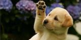 Ученые доказали, что собаки запоминают все действия хозяев