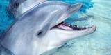 Ученые выяснили причину массовых самоубийств дельфинов