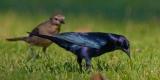 Расчетливые птицы-паразиты
