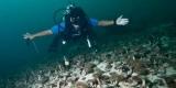 На дне океана нашли ранее неизвестных существ