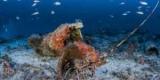 У берегов Майорки археологи обнаружили затонувший античный корабль